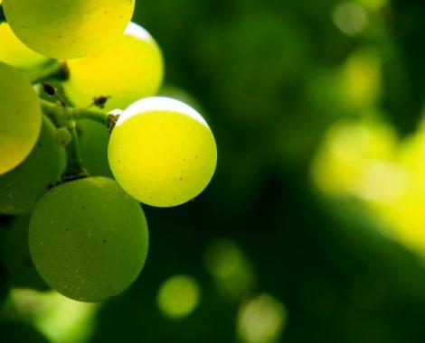 vineyard-2698474